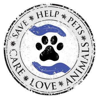 Tierkrankenversicherung – OP Schutzversicherung für Hund – Pferd Vergleich